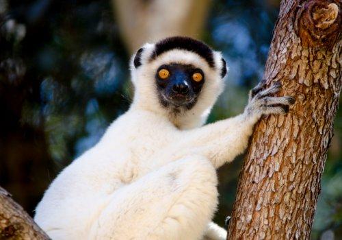Madagascar, en terre Makay - 18h30